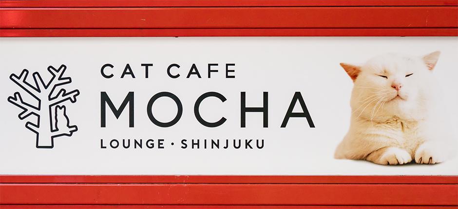 猫カフェ MOCHA(モカ)ラウンジ新宿店